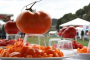 About Tomato Fest