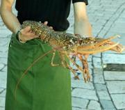 Fresh seafood at pompano seafood festival