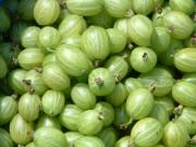 Gooseberries are rich in vitamin C.