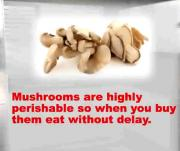 Tips For Storing And Cooking With Pleurotus (oyster) Mushrooms