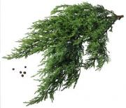What Are The Benefits Of Juniper Oil
