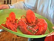 How to Boil A Super Jumbo 3lb Live Maine Lobster