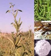 Guar Gum-white powdery edible substance