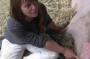 Discussion About Pigs And Gestation Crates