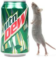 Man claims to have found a mouse in a Dew can