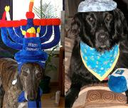 Hanukkah with pets
