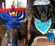 Hanukkah with pets
