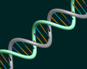 Undamaged DNA