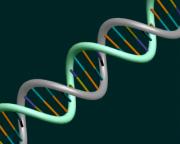 Undamaged DNA