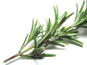 It is easy to cook with rosemary