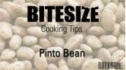 Pinto Bean