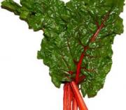 Fresh and juicy chard