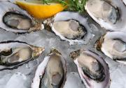 Oysters can keep you immune during Fall season.