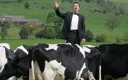 Marcello Bedoni Serenades to Cows for Gelato!