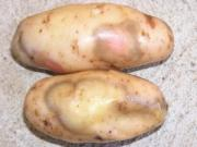 Tips to Identify Rotten Potato