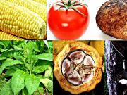 Are Our Crops Infected with GMO from Cross Pollination