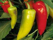 Seasons - Hungarian Hot Peppers