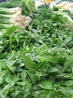 Herbal remedies for vertigo treatment