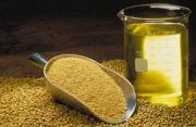 "Soybean oil for hair -""Bean up"" your hair for luster and strength"