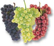 How to eat grapes? - Plucky tips