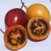 how to eat tamarillo, the blushing succulent fruit?