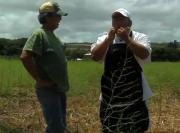 Waialua Asparagus Promo