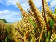 Saving crops from climate change is required for the future generations