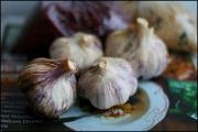 Garlic bulbs that have a wonderful history as food