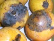 Tips to identify rotten mango