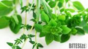Tips To Store Fresh Herbs