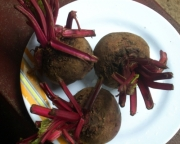 Beet during pregnancy