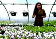 Lohas: Lifestyle Of Health And Sustainability
