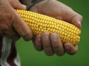 Rise in meat prices due to rise in corn prices