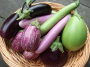 Freezing eggplant