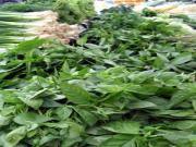 Choosing and Cleaning - Fresh Herbs