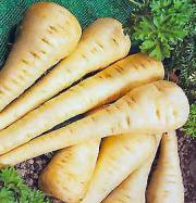 Freezing mashed parsnips