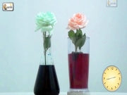 Colored Flowers | Color Changing Flower Experiment