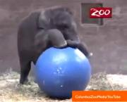 Elephant Plays Water Polo for 5th Birthday in Adorable