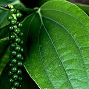 Black pepper oil is derived from black peppercorns