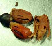 Vomiting and Dairrhea are some of the common side effects of nutmeg