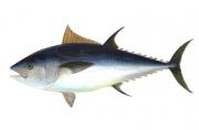 Is tuna for breakfast healthy