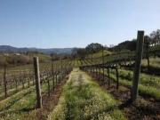 Montage Video: Capturing One Year of Wine Country Life at Jordan Vineyard & Winery