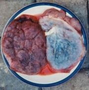 Hmmm...Care for some placenta? UGH!!!