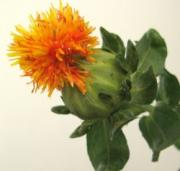 Safflower oil is extracted from safflower seeds.