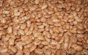 Can Pinto beans and enjoy greater nutrition year-round