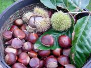 Healthy Foods of Winter Season Chestnuts