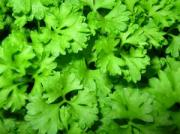 Parsley during pregnancy.