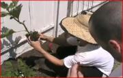 Late Summer/Fall Urban Garden Act3