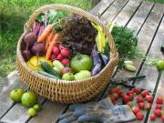 The organic vegetables from your garden