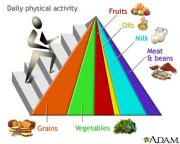 Learning about food pyramids and healthy diets guides you to balanced diet consumption